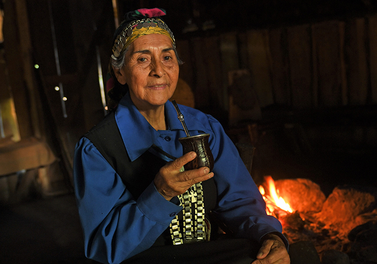 Circuit Araucarie et Mapuches