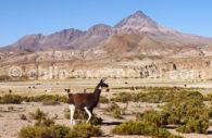 Chorolque, Bolivia