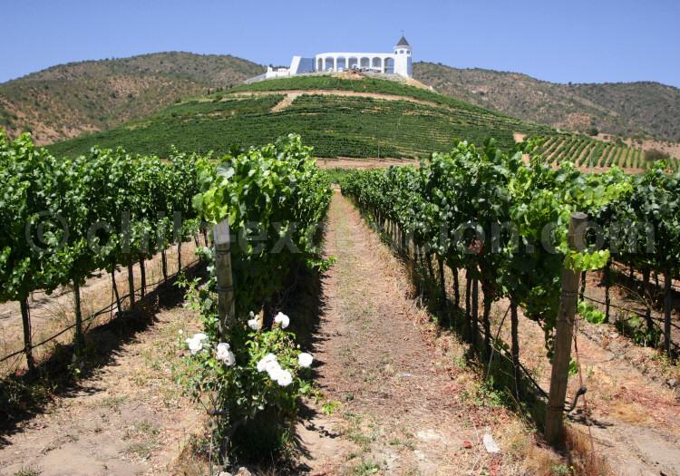 Route des vins chiliens
