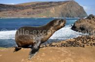 Faune des îles Crusoé