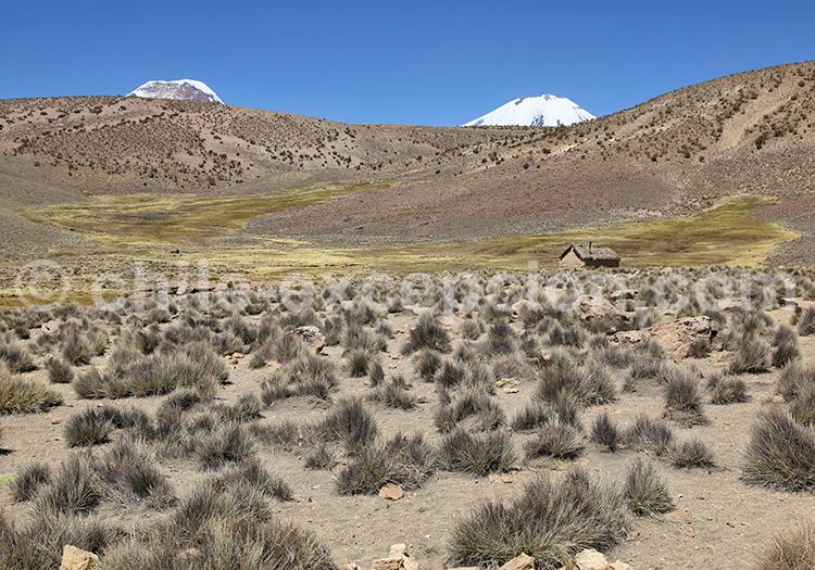 Paysages et flore du désert d'Atacama