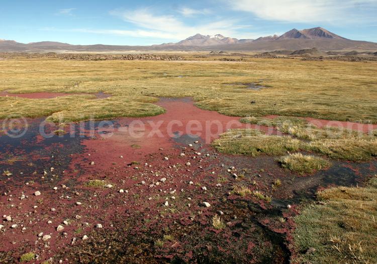 Site d'Atacama, Chili