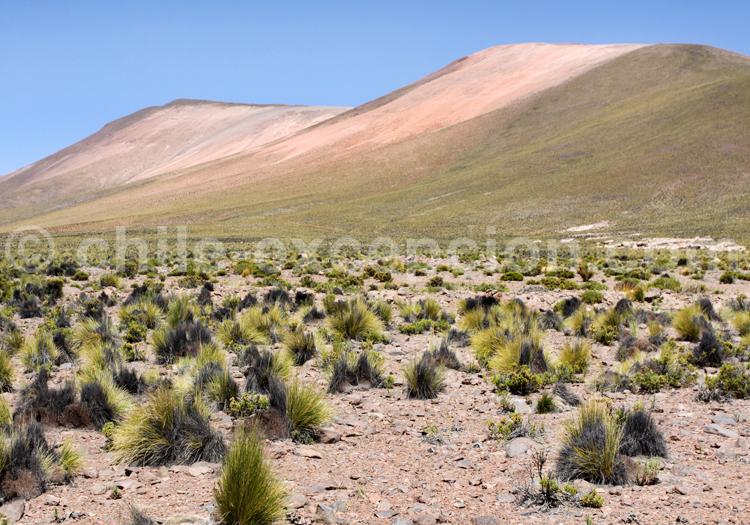 Vallée des hauts plateaux chiliens