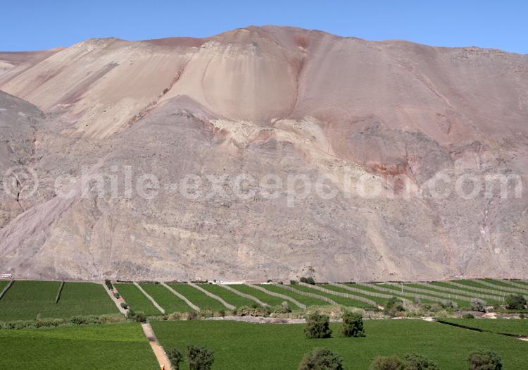 Vallée encaissée dans le désert d'Atacama