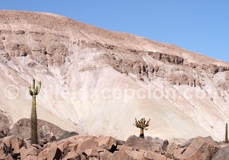 Paysage du Nord du Chili