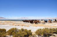 Paysage du Nord chilien