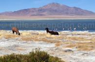 Atacama, voyage sur mesure au Chili