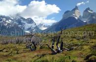 Patagonie des lacs, Chili
