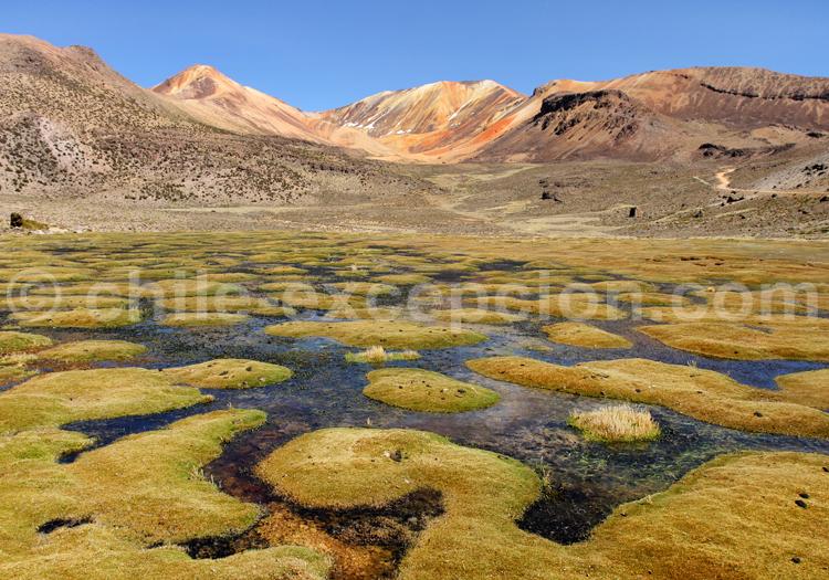 Plateau de Suriplaza, Chili