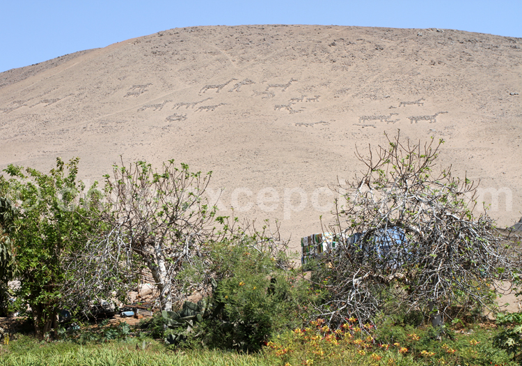 Cerro Sombrero, Vallée Azapa