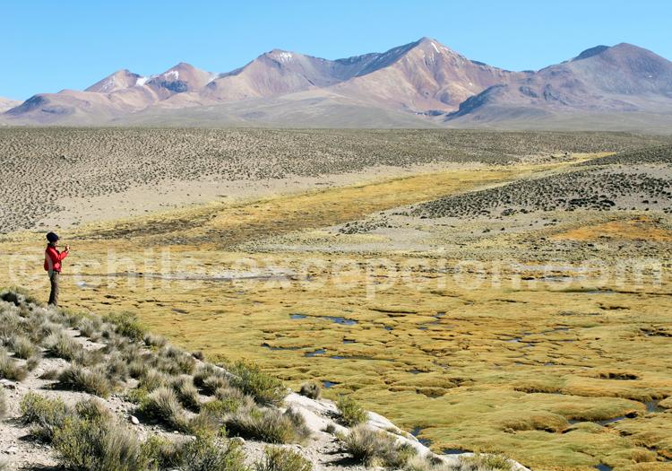 Parc Lauca, Nord Chili