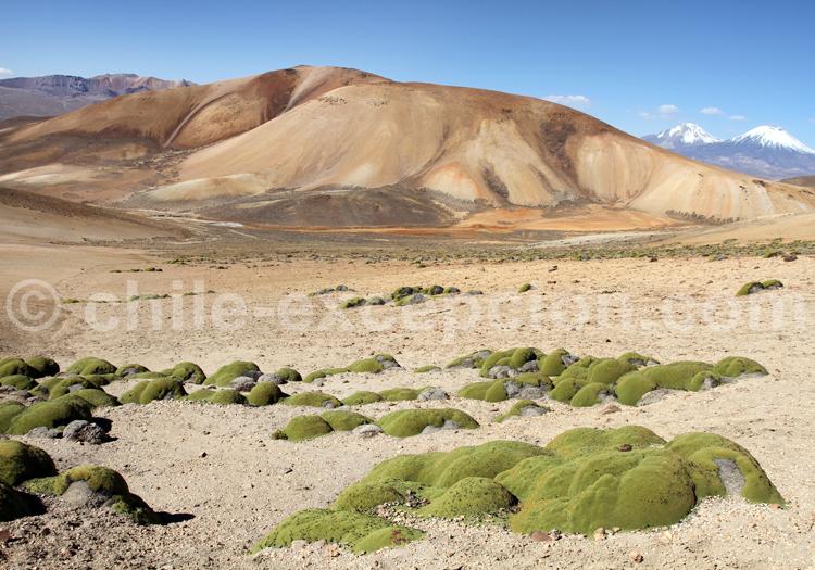 Agence de voyage spécialisée, Chili