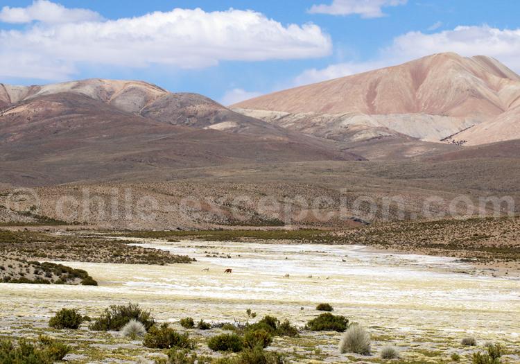 Parinacota, Nord chilien