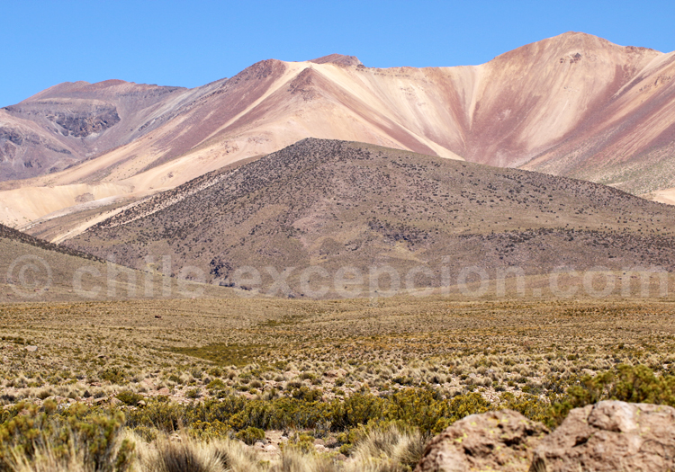 Agence de voyage en ligne, Nord du Chili