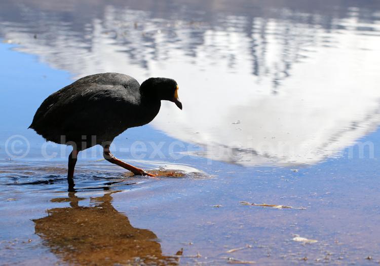 Réserve de faune, Parc Lauca au Chili