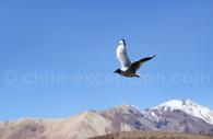 Voyage afari animalier au Chili