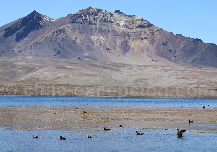 Safari photos, animaux du Chili