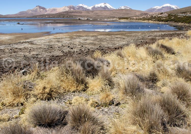 Agence de voyage, Santiago du Chili