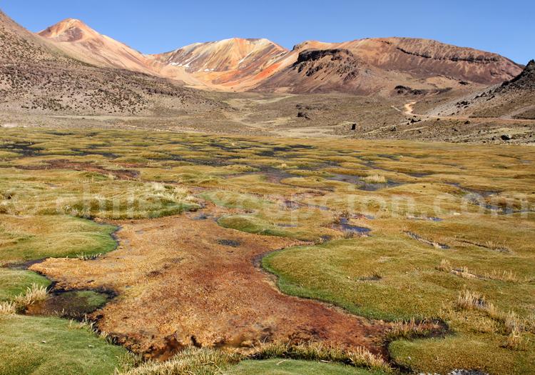 Suriplaza, Nord du Chili