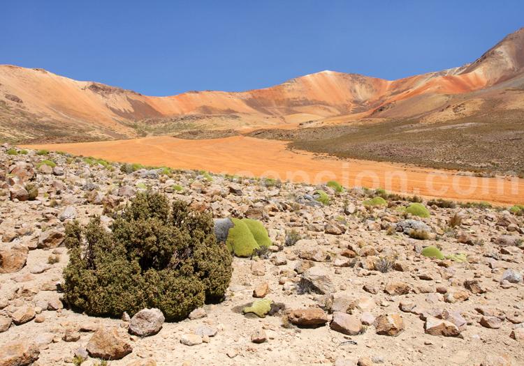 Suriplaza, Altiplano Chilien