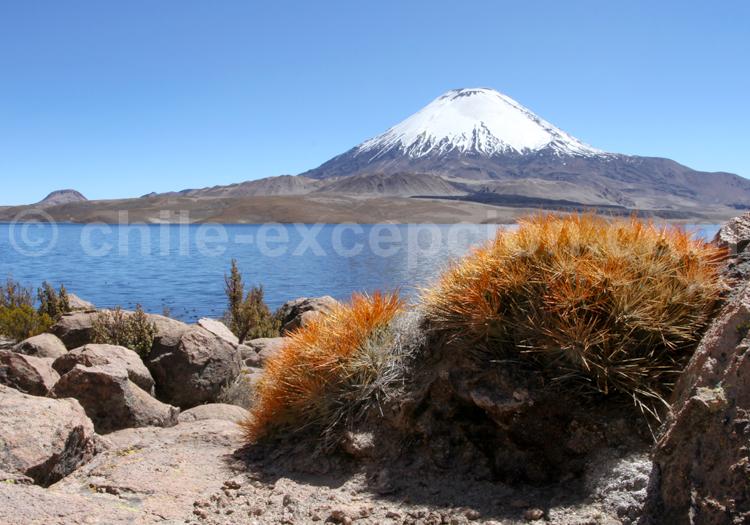 Volcan Lanin, Parc Lauca au Chili