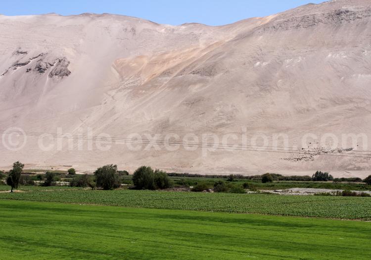 Lluta, nord Chili