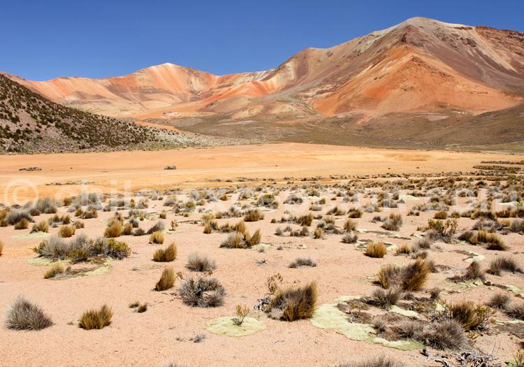 Suriplaza, hauts plateaux chiliens