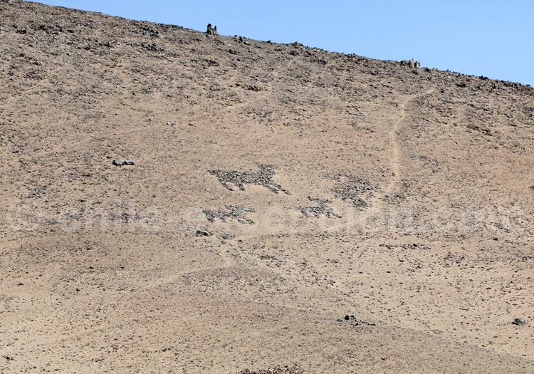 Formes zoomorphes, Cerro Sombrero