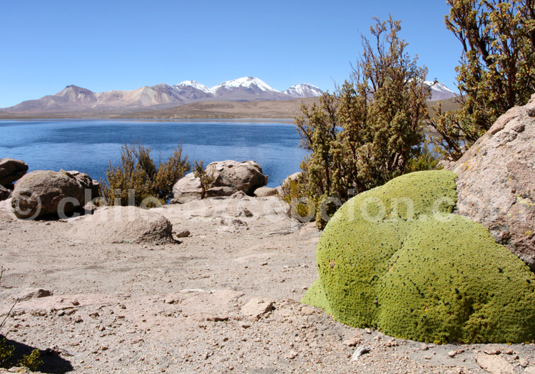 Paysages du Nord du Chili
