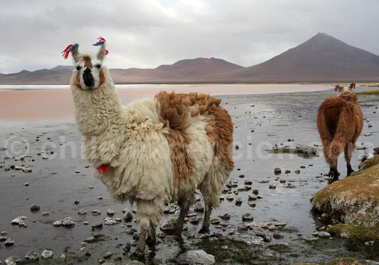 Voyage privé au Chili