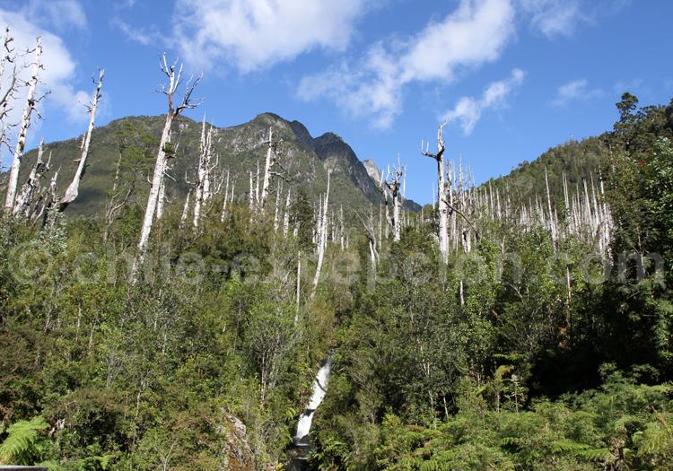 Parque los Alerces, Chili
