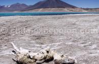 Voyage sur mesure au Chili