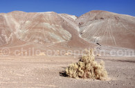 Paysage aride, Copiapo