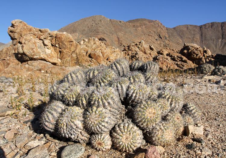 Cactus, Parc Pan de Azucar