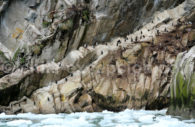 Oiseaux de Patagonie