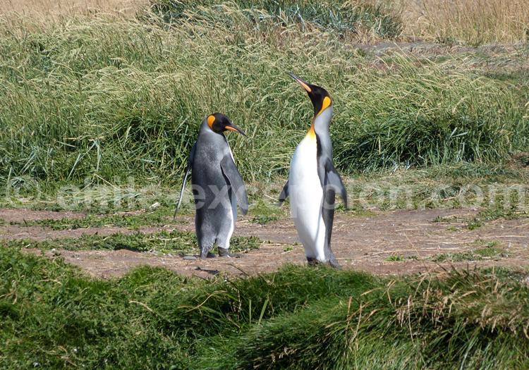 Parc Pinguino Rey