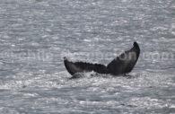 Observation des baleines, Patagonie