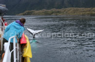 Observation des baleines, Chili