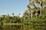 Réserve de Tambopata, Amzonie