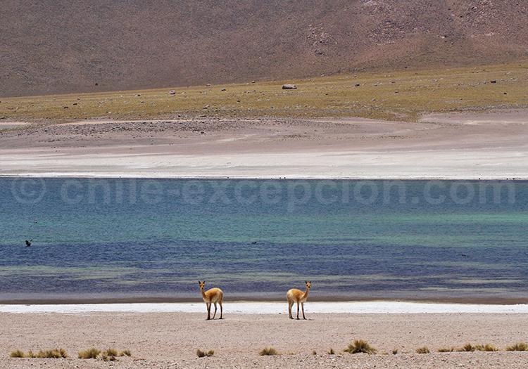 Lagunes Miscanti et Miniques