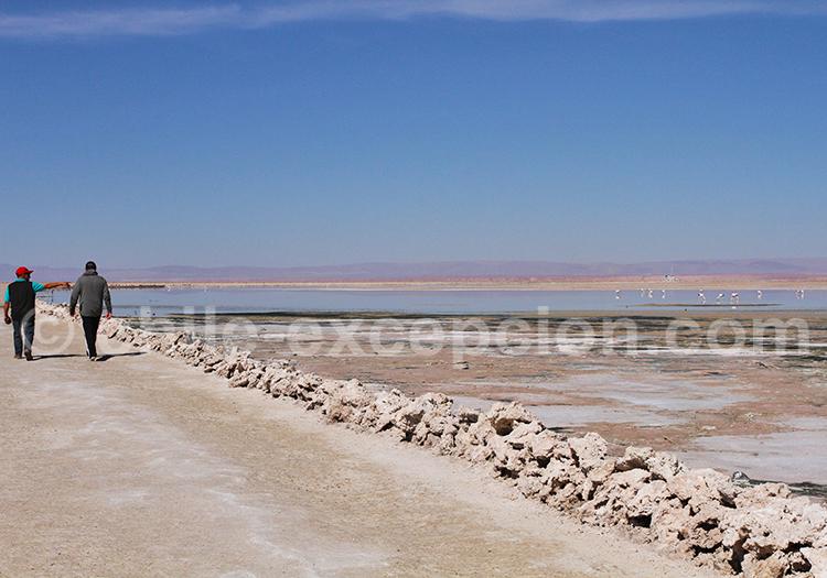Excursion autour de San Pedro de Atacama, Laguna Chaxa