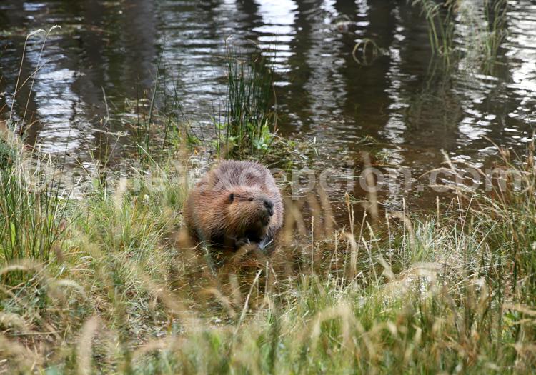 Marmotte, Terre de Feu