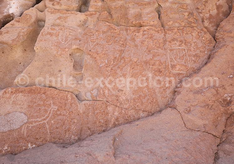 Lama, dessins rupestres de Yerbas Buenas