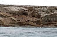 Otaries à crinière, Détroit de Magellan
