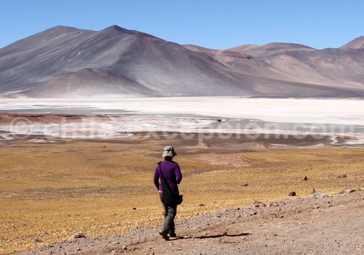 Salines, région d'Atacama