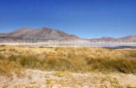 Talar, région d'Atacama