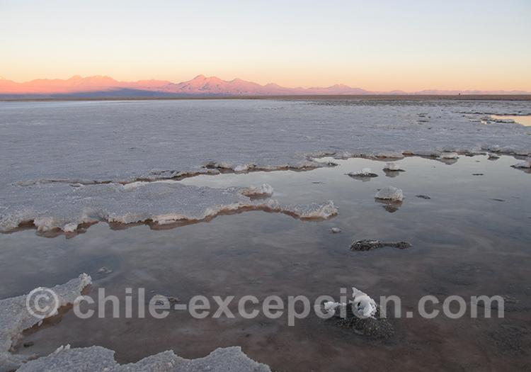 Excursion laguna Chaxa