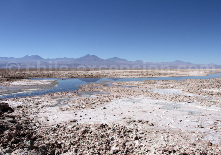 Chaxa, Altiplano chilien