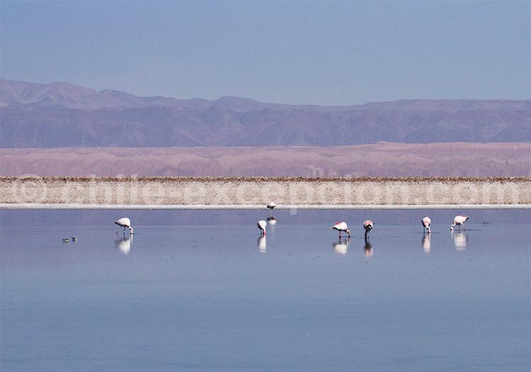 Désert de sel autour de San Pedro de Atacama