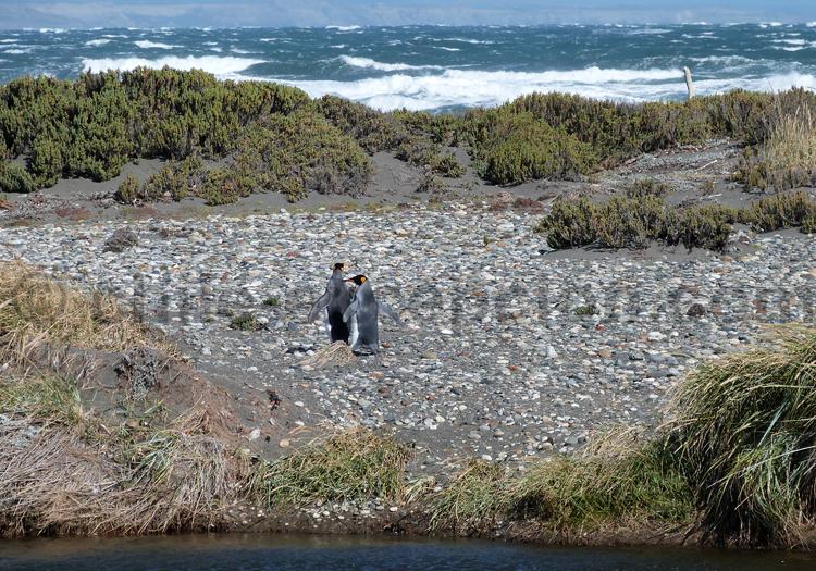 Estancia San Clemente, Patagonie